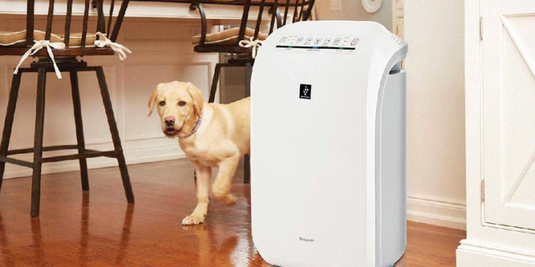 Do Air Purifiers Help With Pet Hair